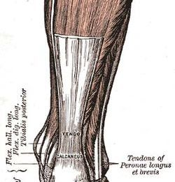 Achilles tendon | Biblical Thoughts